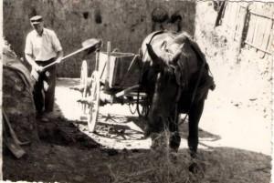 Deda i konj Cvetko