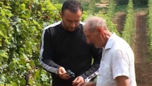 Deda i Peđa u vinogradu